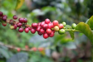 Wir reisen in das Kaffeeland Kolumbien