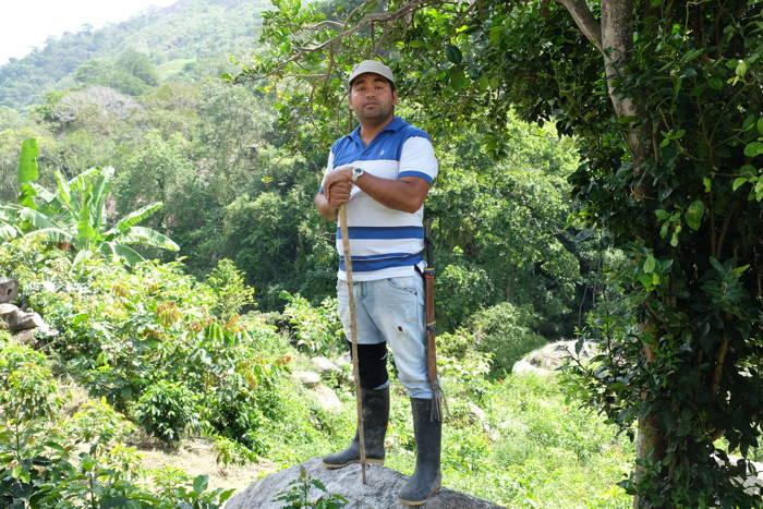 Kaffeeanbau in Kolumbien