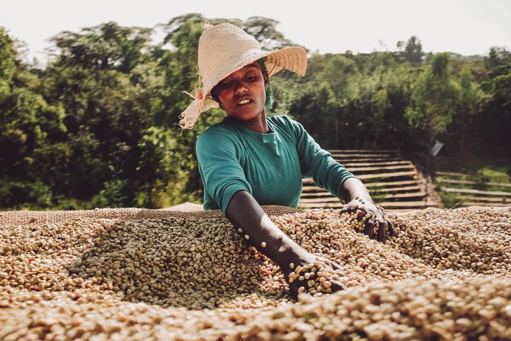 Der Kaffee wird auf Drying Beds zum Trocknen ausgelegt