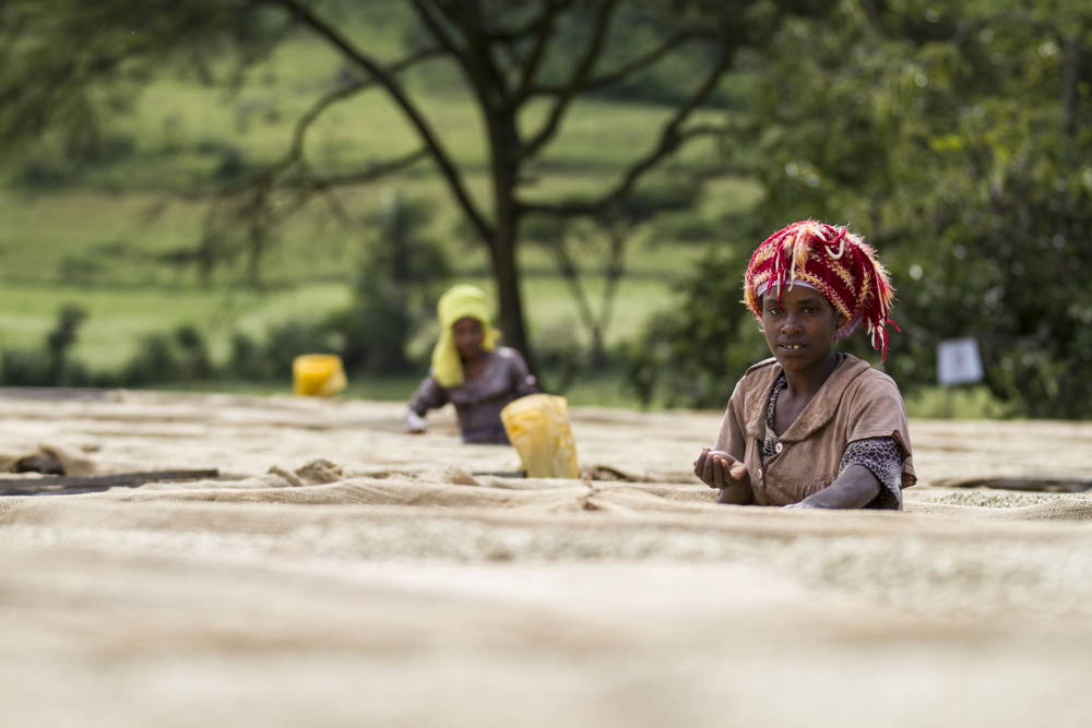 Kaffeeanbau Äthiopien