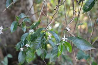 Natur in der Biftu Gudina Kooperative