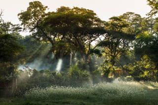 Äthiopische Waldgärten