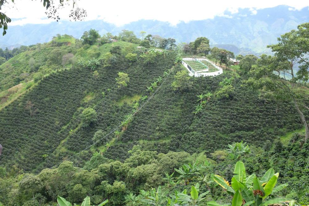 Kaffeeanbaugebiete in Kolumbien