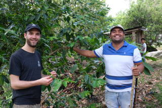 In Kolumbien finden je nach Anbaugebiet zwischen ein bis zu drei Ernten pro Jahr statt.