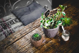 Wir stellen vor: The Greens – Coffee & Plants