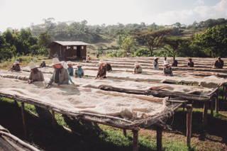 So wird Kaffee in Äthiopien in der Sonne getrocknet