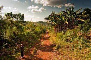 Insbesondere die in Äthiopien häufig vorkommenden vulkanischen Böden sind sehr nährstoffreich - perfekt für den Kaffee.