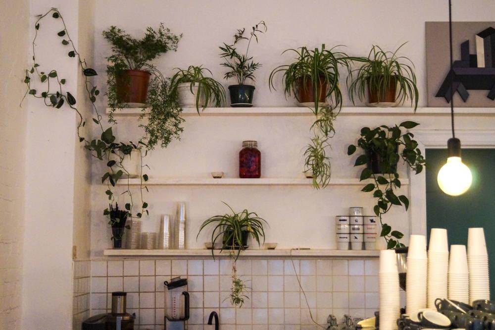 Die Pflanzen im Home