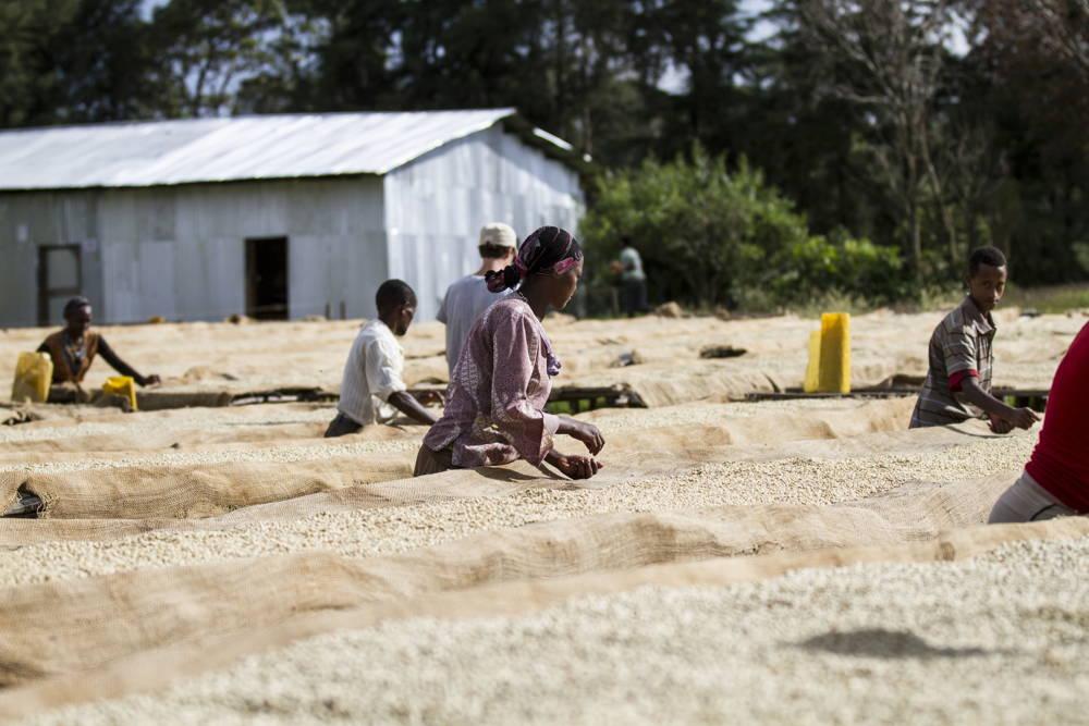 Kaffeereise in das Ursprungsland des Kaffees: Äthiopien