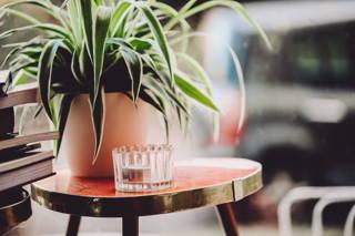 Pflanze und Teelicht im Hom Café