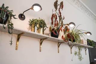 Regal mit Pflanzen