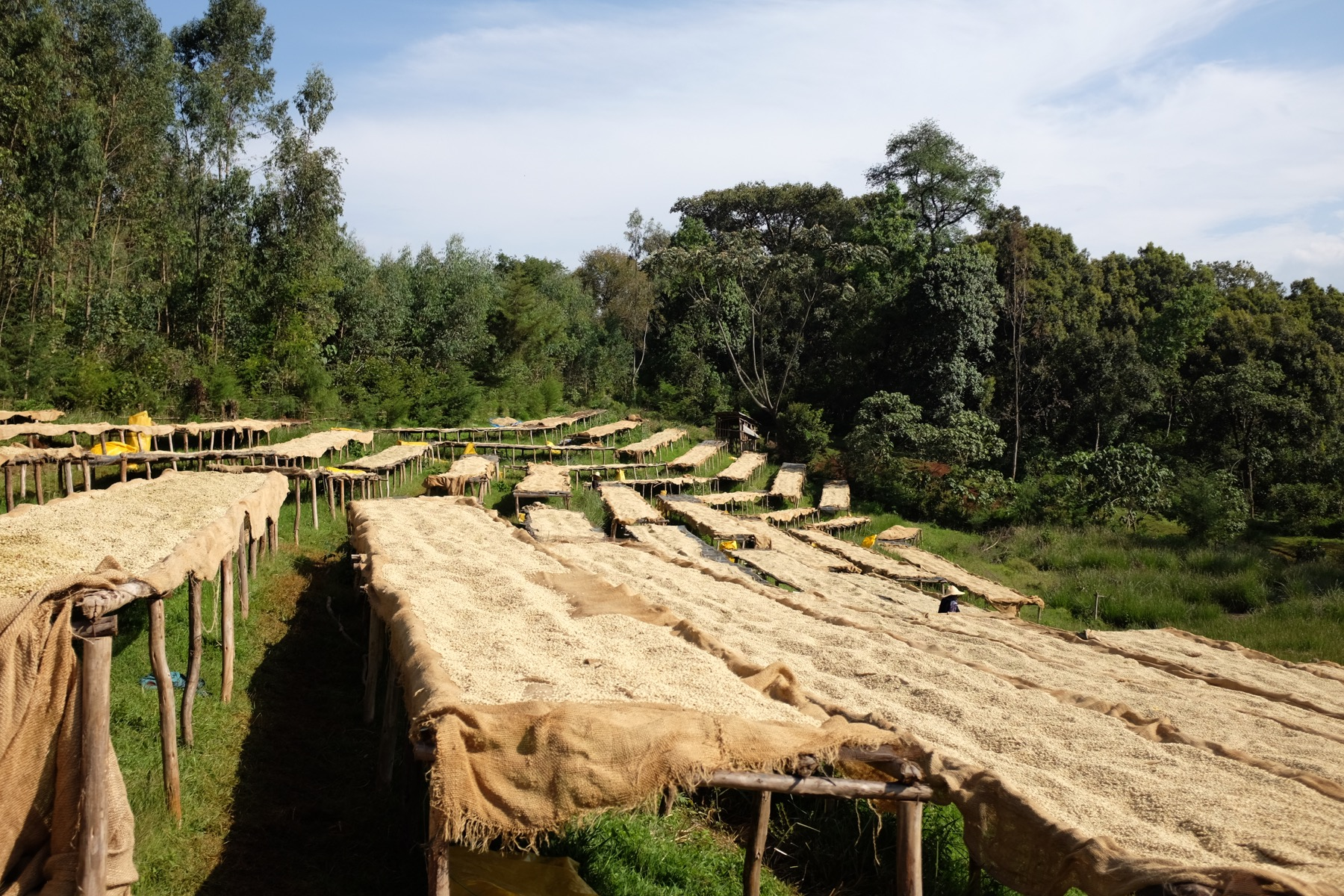 Drying Beds in Doyo, Äthiopien