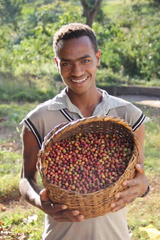 Ein Korb mit Kaffeekirschen