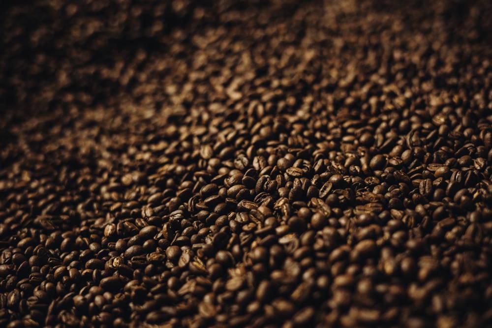 Die frisch gerösteten Kaffeebohnen